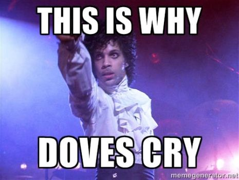 Prince meme: This is why... by breawsomegreen