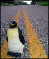 runaway penquin by mistake