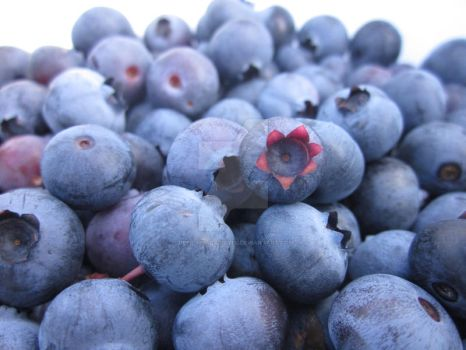 Blueberries by deep-sea-carrots