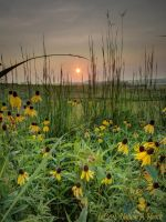 Early Morning Prairie by abstractcamera