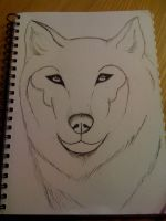 First ink sketch of Wolf by Alpha-Female13