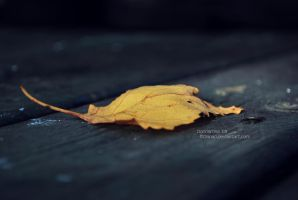 Sign of Autumn by OHinaO