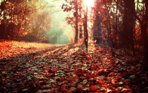 Autumn Setting by TheBroth3R