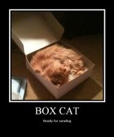 Box cat 2 by LeonKSpiderKitty