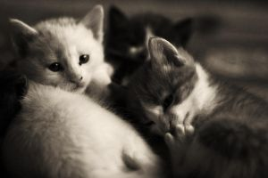 What are you, we are cats by bougainvillea
