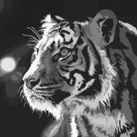Tiger by randmbeauty