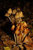 Mushroom Autumn V by webcruiser