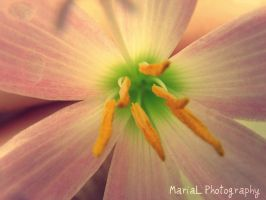 Flower by marycb97