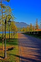 Stellenbosch Wine Farm by erene