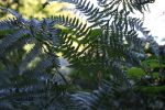 the fern bush by loobyloukitty