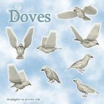 Doves by zememz