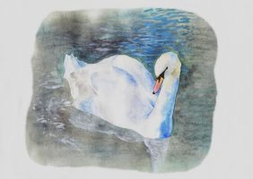 Swan Watercolour by L-i-n-d-s