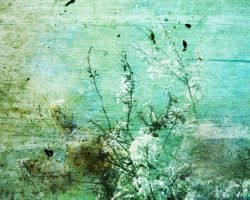 butterfly-stock_texture 004 by butterfly-stock