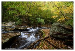 Soft Water Autumn Color by TRBPhotographyLLC