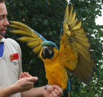 .Macaw wings 3. 1110 by DelinquentDog