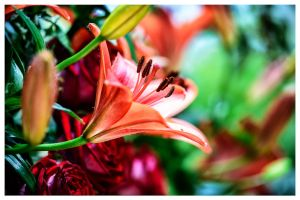 Colorful Flower by calimer00