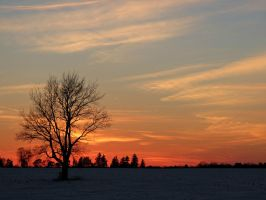 One Tree in the Sunset by Michies-Photographyy
