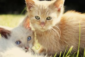 Rescued Kittens: Alaska and Ginger by LLJPhotography