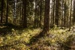 Spring In The Woods by purstotahti