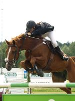 Warmblood showjumping 3 by wakedeadman