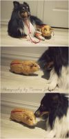 My dog and his piggie by martiinej