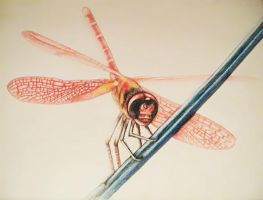 dragonfly by milky78