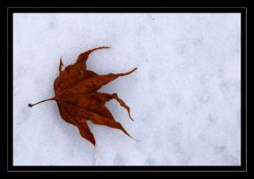 the leaf by chinlop