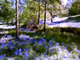 The Bluebells by Nigel-Hirst