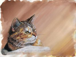 Cat in a Sunbeam by De-Vagrant