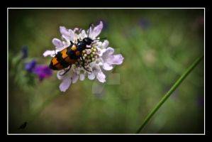 Eating my wild flowers by jennystokes