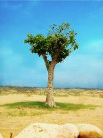 The Loneliness tree by Amjad-Miandad