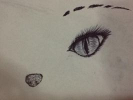 Cat Eyes that See too Much by jess-the-red-head