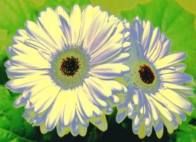 painted daisies by bambi1964