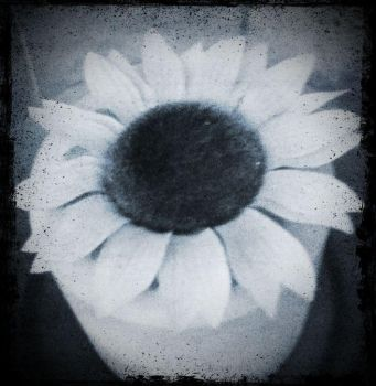 Helianthus by MOVINGPICTURES1981