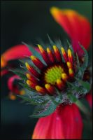 red and green by RichardRobert
