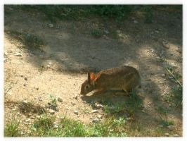 IACE Wildlife: Wabbit by I-Am-Canadian-Eh