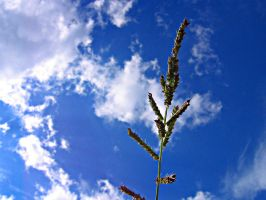 Grass and Sky by LordSinrath
