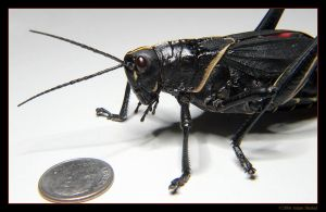 Giant Black Space Grasshopper by mantispid