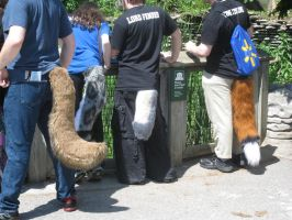 Furries at the zoo by Rennon-the-Shaved