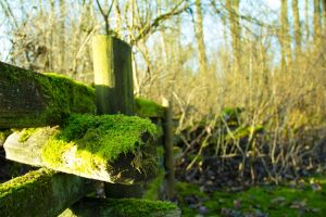 Mossy Fence by Xiox231