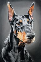 Doberman - portrait by Annasko
