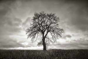 alone tree by BelcyrPiotr