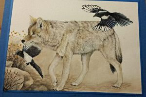 Coyote and Magpie Work in Progress by MorRokko