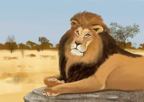 The Lion by Mathieustern