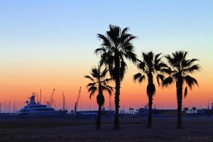 Palms near the port by Jorapache