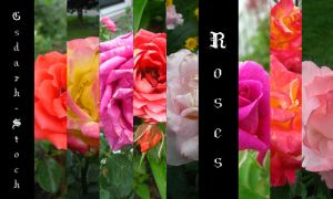 Roses PACK by gsdark-stock