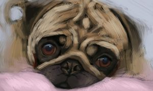 Quickee Pug by porojj