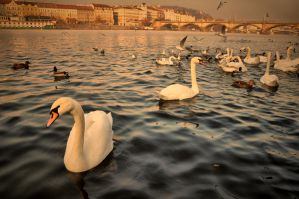 City of Swan II by tomsumartin