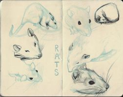 Rat Sketches by my-ain-sel