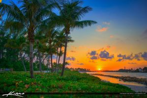 Jupiter-Inlet-Sunset-Coconut-Tree-at-Park by CaptainKimo